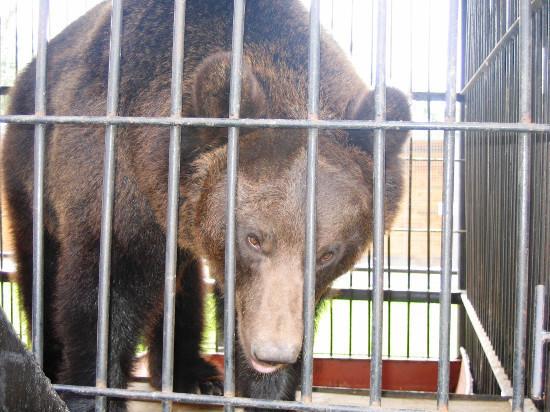 В тамбовском зоопарке проснулись медведи