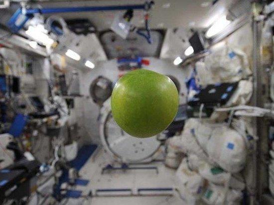 Космические яблоки наукограда показали попервому каналу