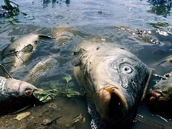 ВТамбовской области вынесли вердикт поделу озагрязнении Цны