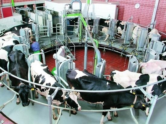 Молочный кластер построят вТамбовской области