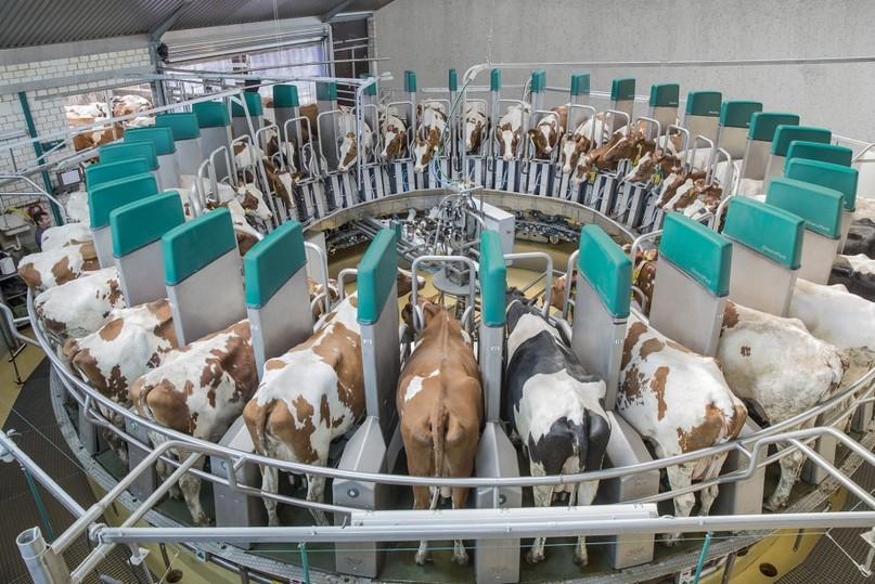 В 2018 вТамбовской области начнется строительство крупного молочного кластера