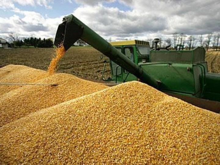 За2017 год Тамбовская область увеличила экспорт зерна вдвое